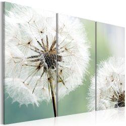 Kép - Fluffy dandelions 120x80