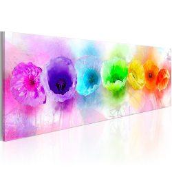 Kép - Rainbow-hued poppies 120x40