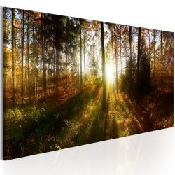 Kép - Beautiful Forest  150x50