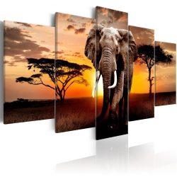 Kép - Elephant Migration 100x50