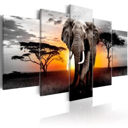 Kép - Elephant at Sunset 100x50