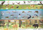 Magyarország vadon élő állatai asztali alátét A3 kétoldalas / Magyarország állatvilága