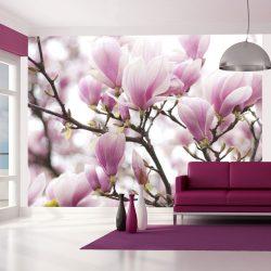 Fotótapéta - Magnolia bloosom