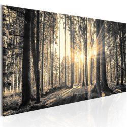 Kép - Forest Sun 150x50