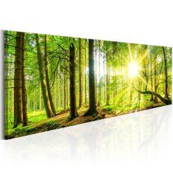 Kép - Majestic Trees 150x50