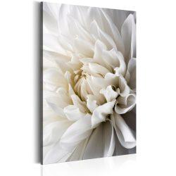 Kép - White Dahlia