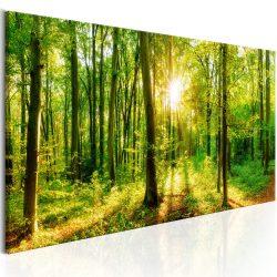 Kép - Green Magic 150x50