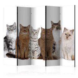 Paraván - Sweet Cats II [Room Dividers]
